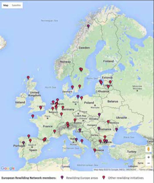 Rewilding in a European Context