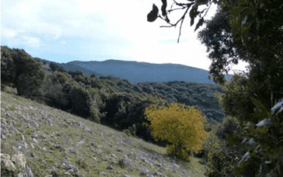 Increasing Number of Wilderness Areas in Italy