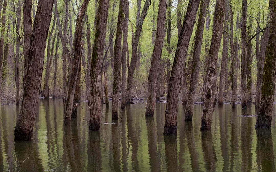 Engineered Wildness: The Lower Mississippi River, an Underappreciated National Treasure