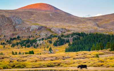 Biodiversity within the National Wilderness Preservation System: How Well Do Wilderness Areas Represent Species Richness across the Contiguous United States?